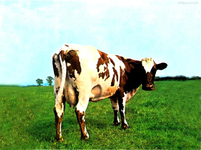 "La famosa copertina di ""Atom Heart Mother"""
